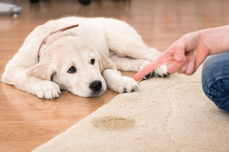 spot removal from pets