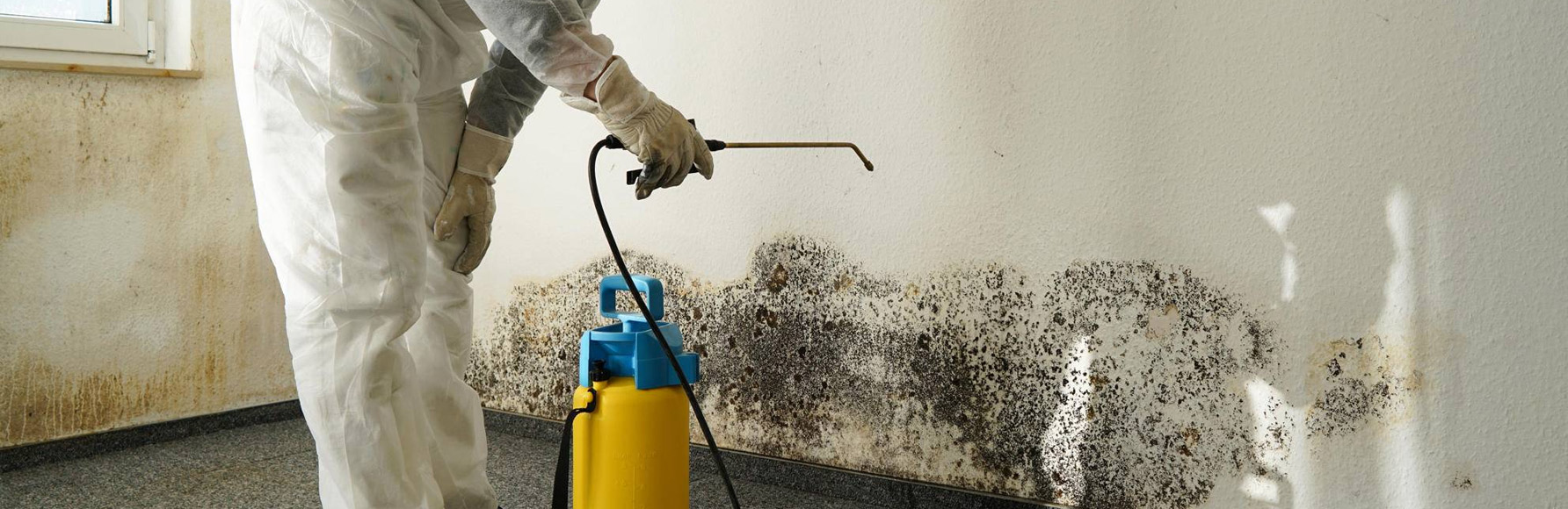Dangers of Mold from Water Damage