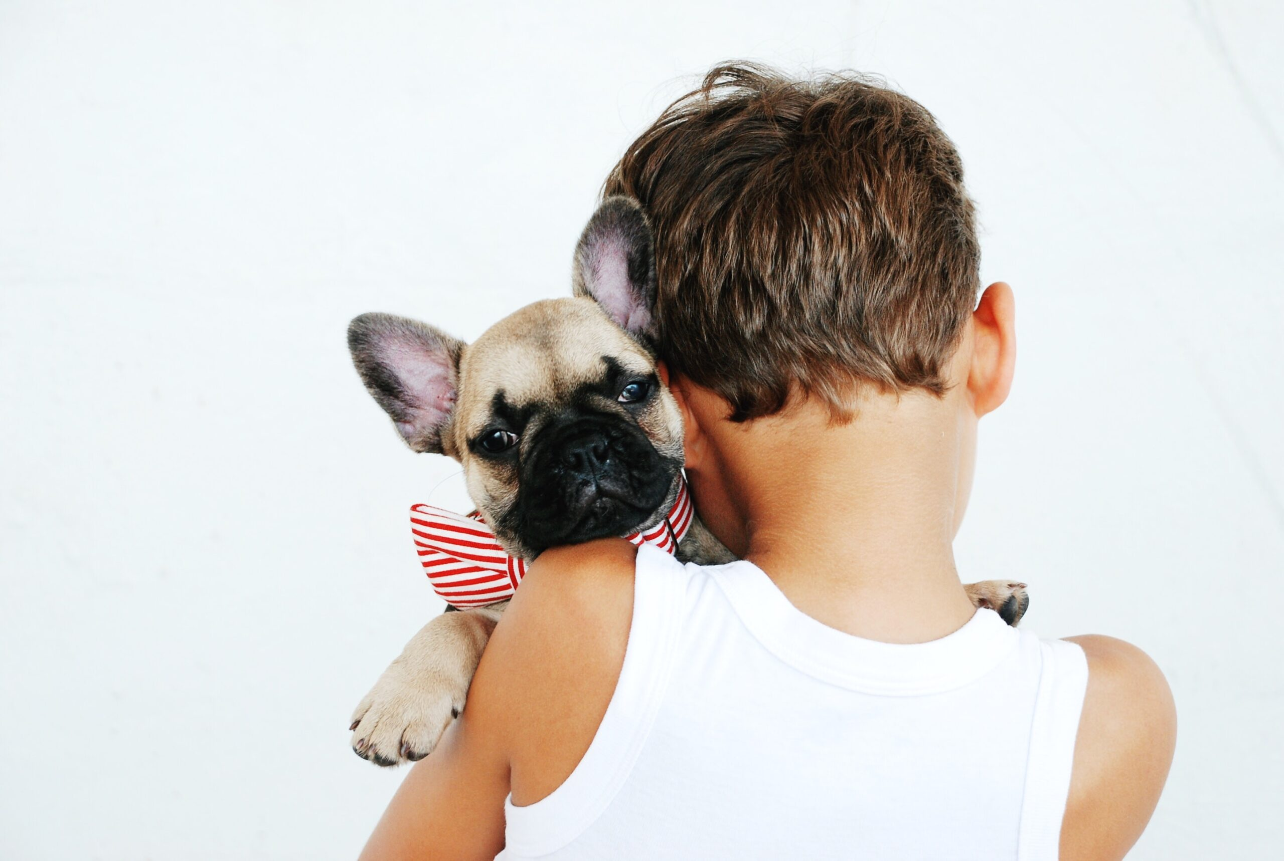 Ways To Have A Pet and Avoid Allergy Problems