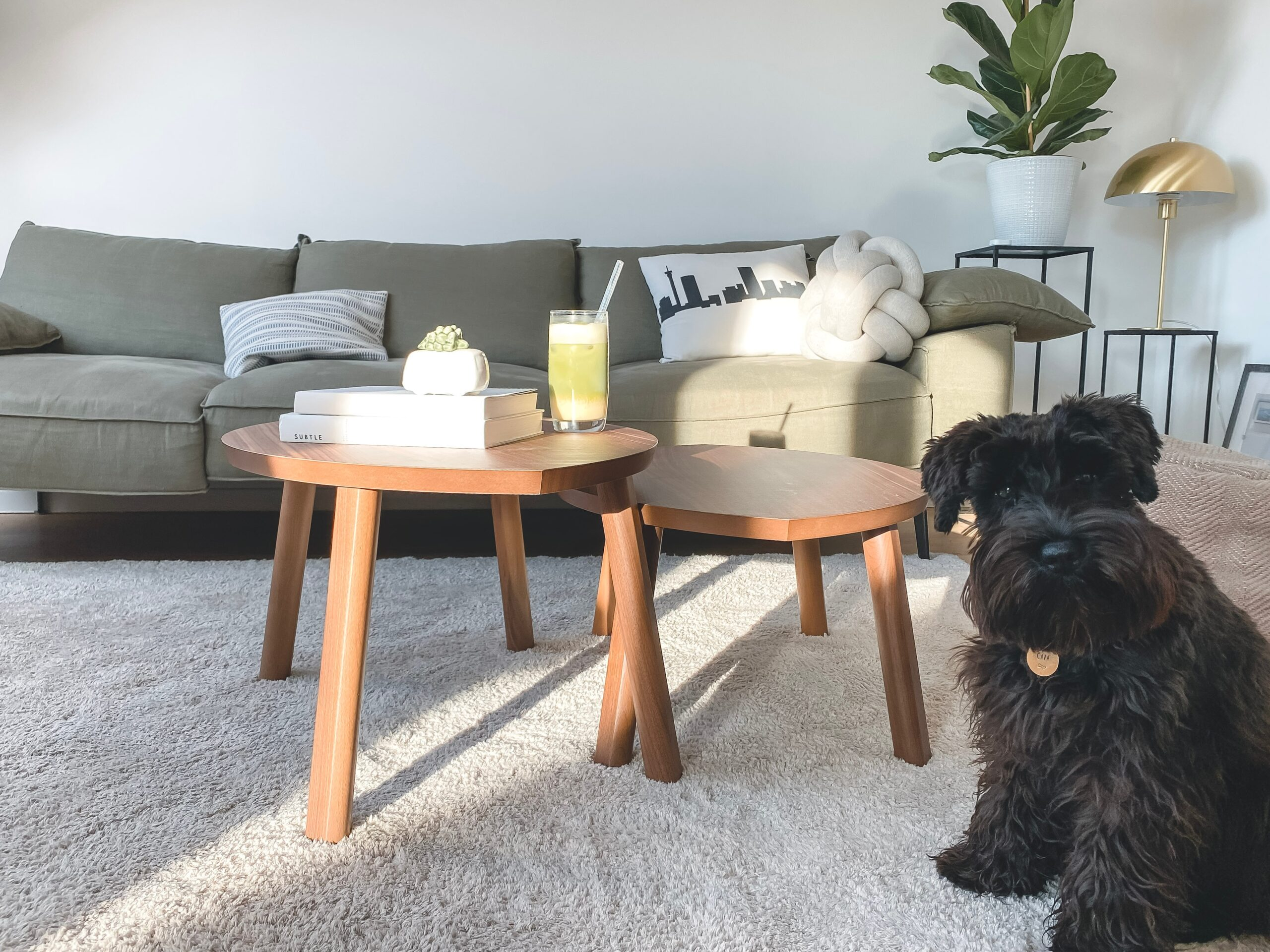 3 Ways You Can Live With Pets And Carpet