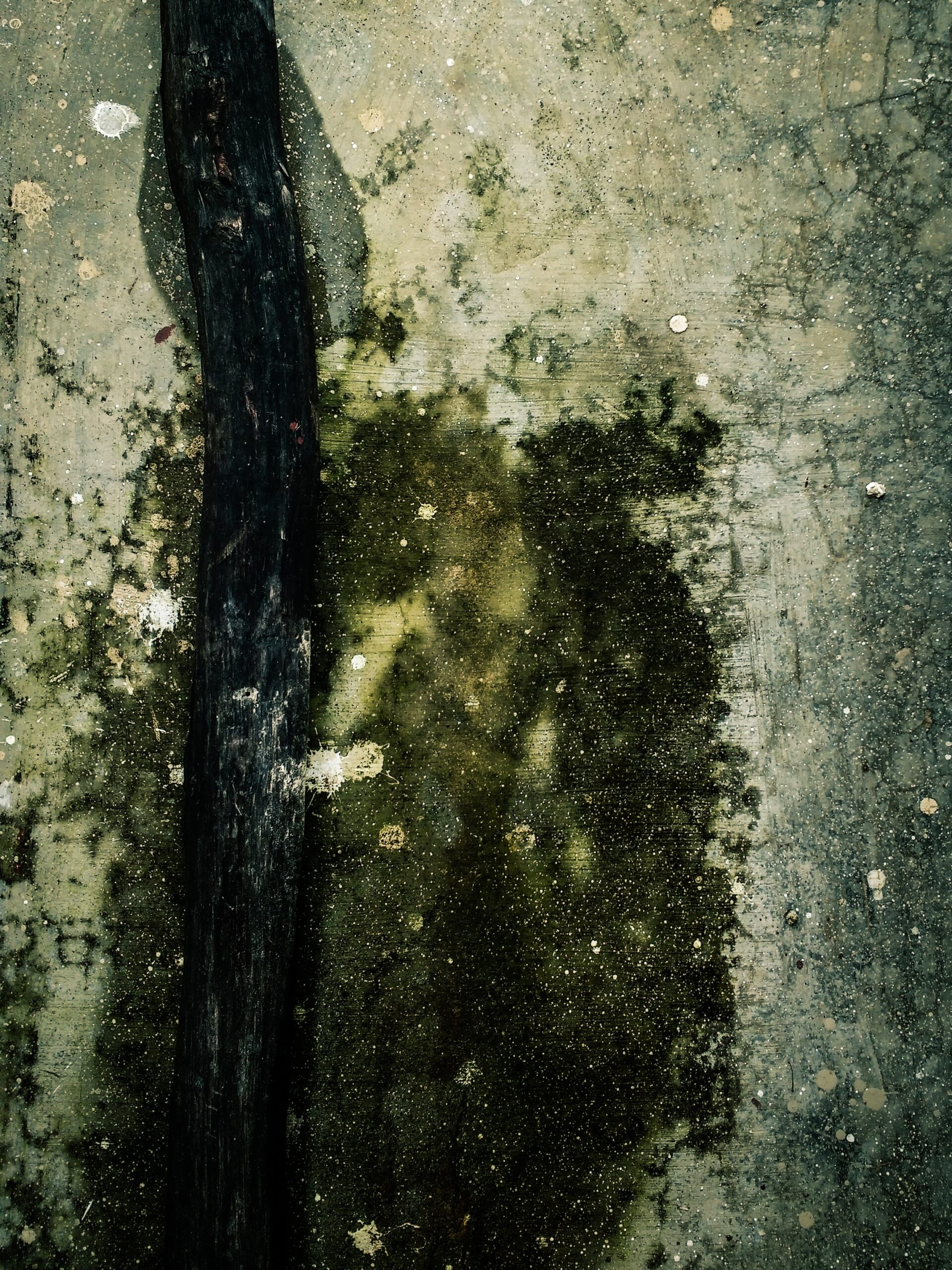 Should I Treat For Mold Myself Or Call The Pros?
