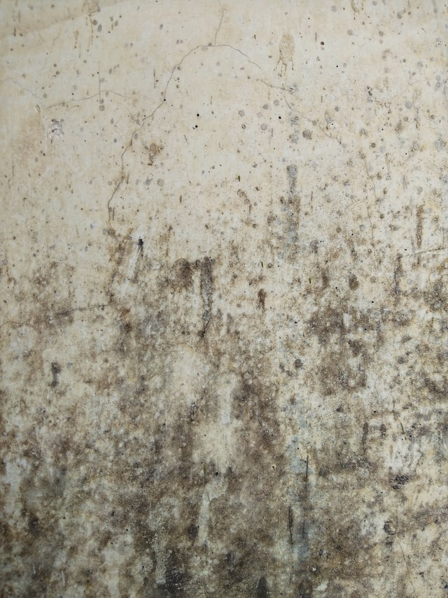 Top 10 Places in Your House to Find Mold